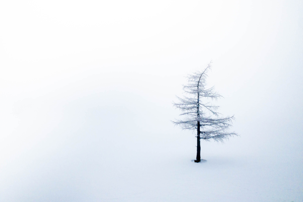 Bent tree in the fog